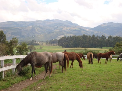 horse rides from quito